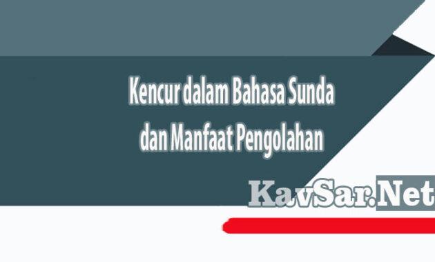 Kencur dalam Bahasa Sunda dan Manfaat Pengolahan